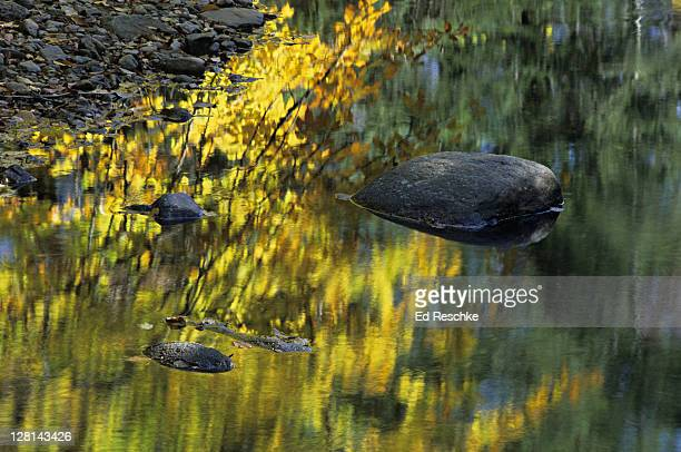 Autumn colors reflected in Little Black Brook, Green Mountains National Forest, near Manchester, Vermont, USA