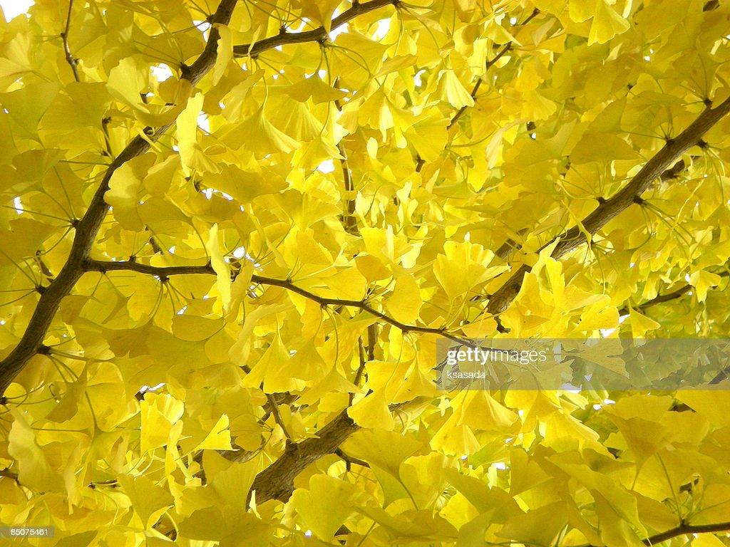 Autumn colors-3