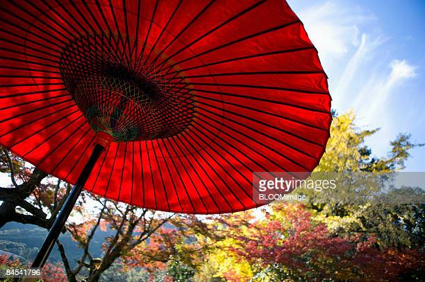 Autumn colours and Japanese umbrella