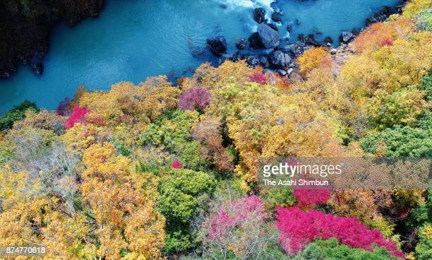 Autumn colours are seen at Tamagawa River on November 15 2017 in Okutama Tokyo Japan The peak of the vibrant colors was a little late this year due...