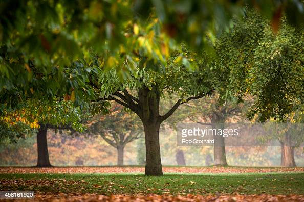 Autumn colours are seen shortly after sunrise in Hyde Park on October 31 2014 in London England Temperatures in London are forecasted to exceed 20...