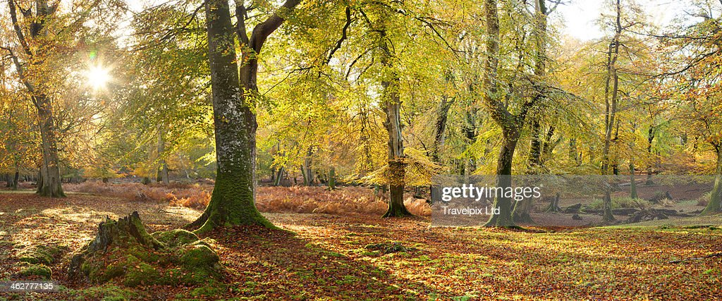 Autumn colours in the New Forest, Hampshire, UK