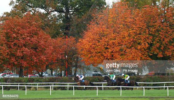 Autumn colours on the trees as horses run past at Wetherby Racecourse