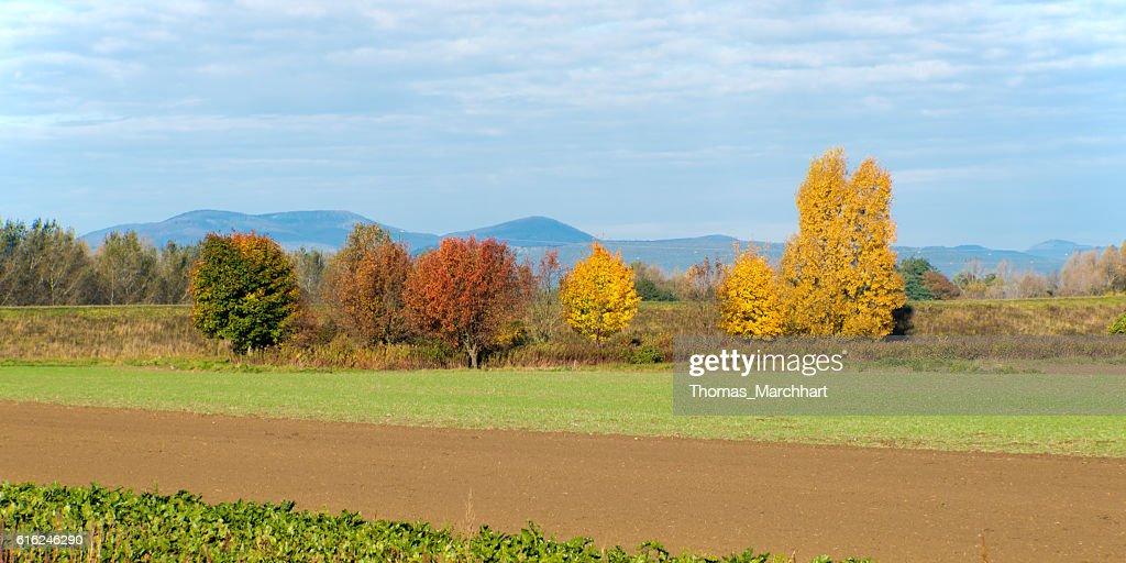 Colores en otoño  : Foto de stock