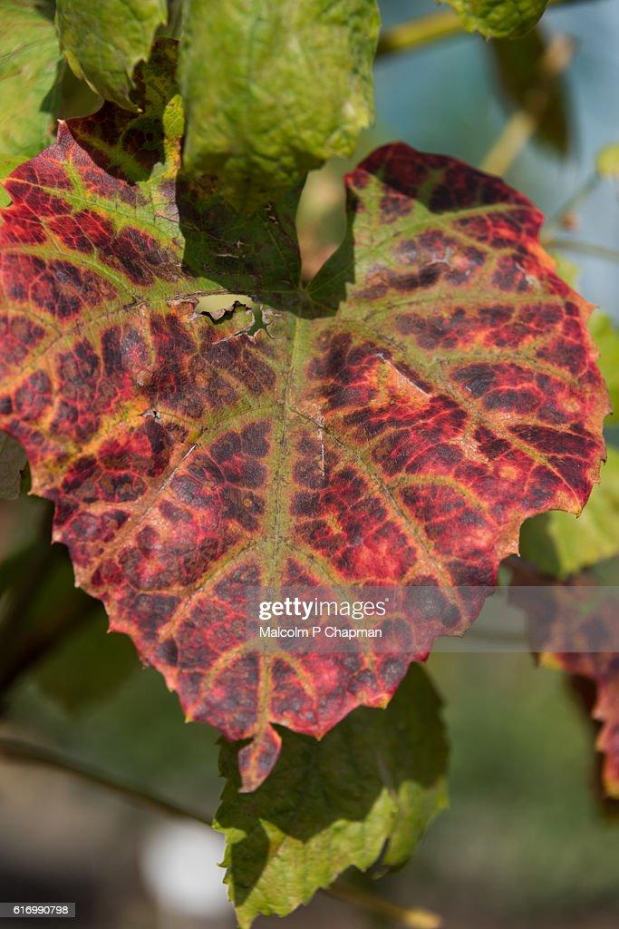 Autumn (Fall) colours : Stock Photo