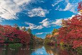 Autumn colours of Kumoba  pond,Karuizawa,Japan