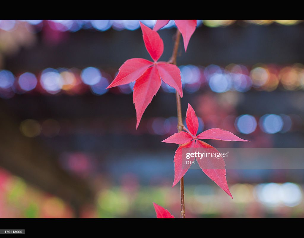Autumn Colours: Swaying in the Early Evening Breez