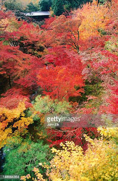 Autumn colours, Tofukuji Temple garden.
