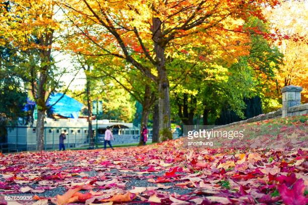 Autumn Colours with Fallen Leaves