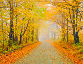 Autumn country road in Vermont