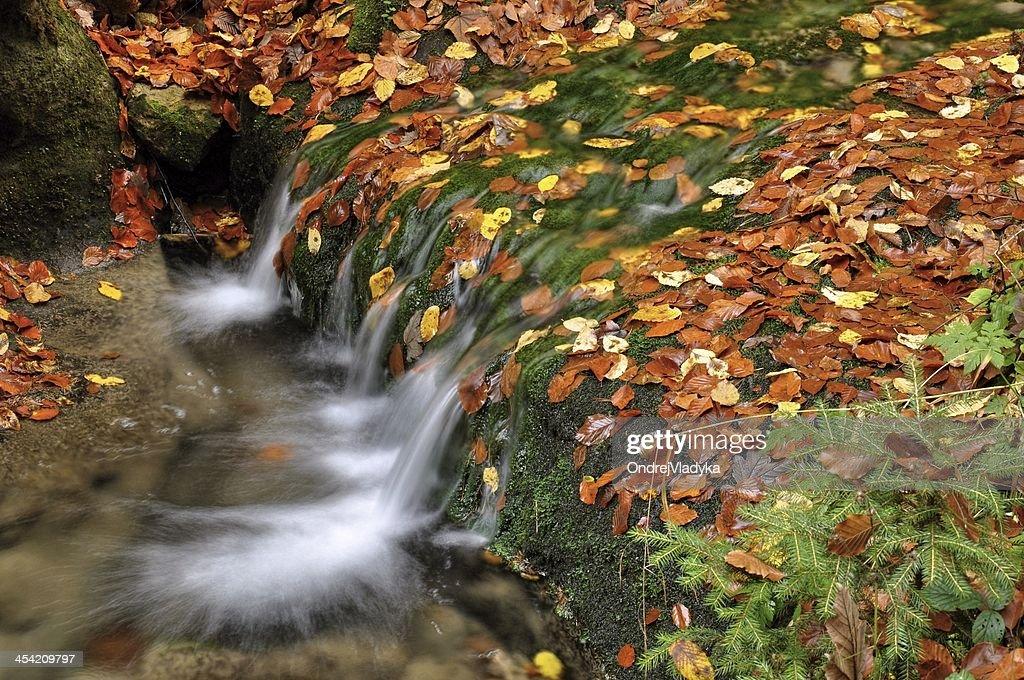 Autumn creek : Stock Photo