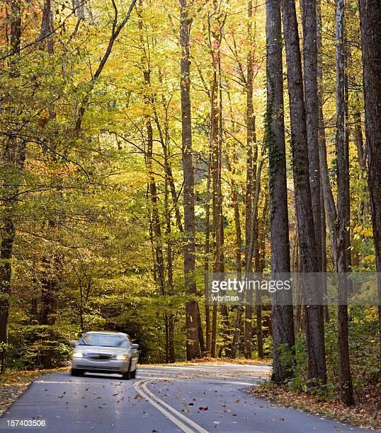 Automne drive
