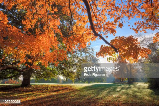 Autumn Early Morning
