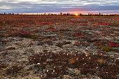 Autumn evening in Tundra, Yamal Peninsula, Russia