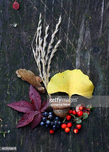 Autumn finds on an old garden table