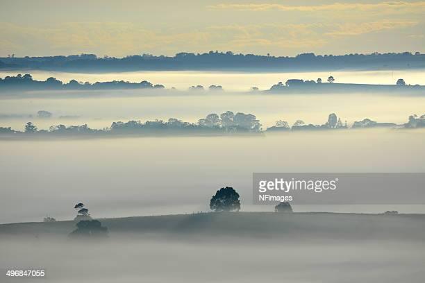 Autumn fog, Wilsons River Valley