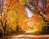 autumn foliage and country lane