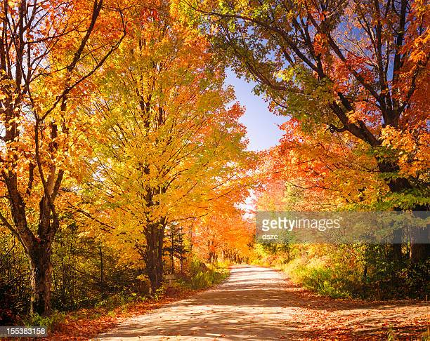 autumn foliage and country lane