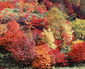 Autumn foliage,  Hachimantai,  Iwate Prefecture,  Japan