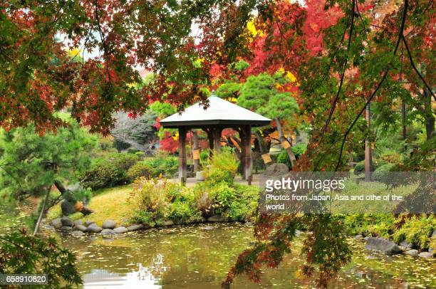 Autumn Foliage in Tokyo