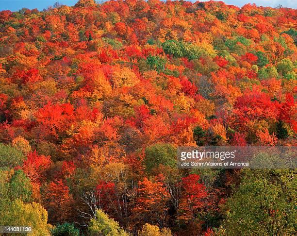 Autumn foliage in Vermont