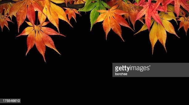 Feuillage d'automne sur noir