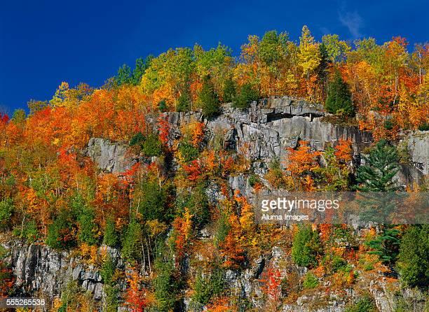 Autumn foliage on rocky cliffs