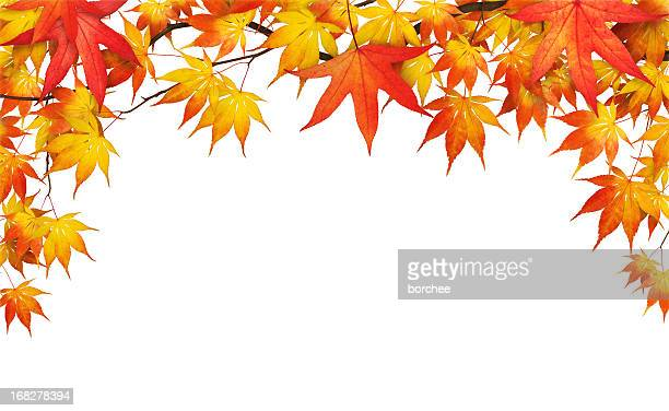 Autumn Foliage On White