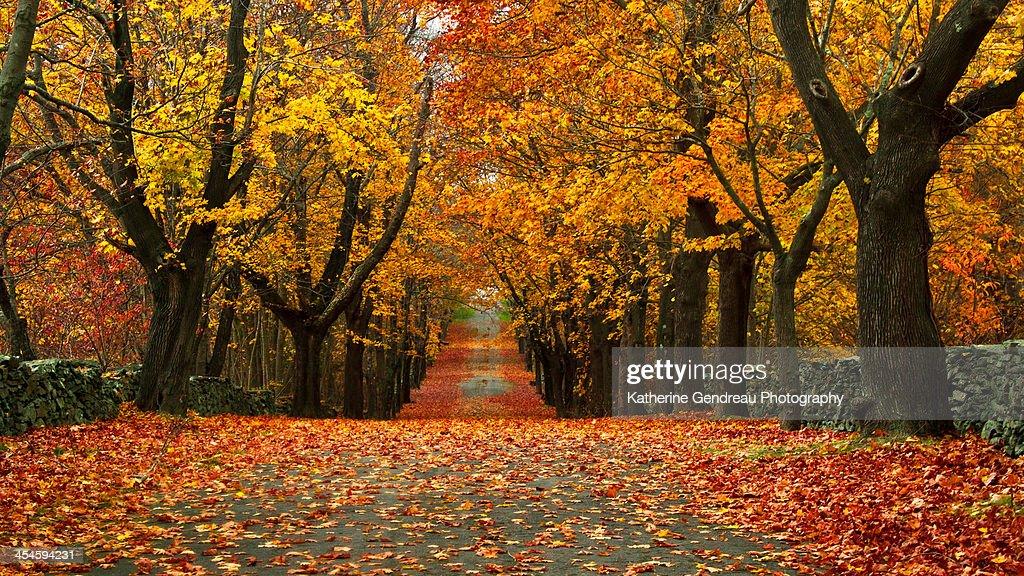 Autumn Foliage Path at the Park