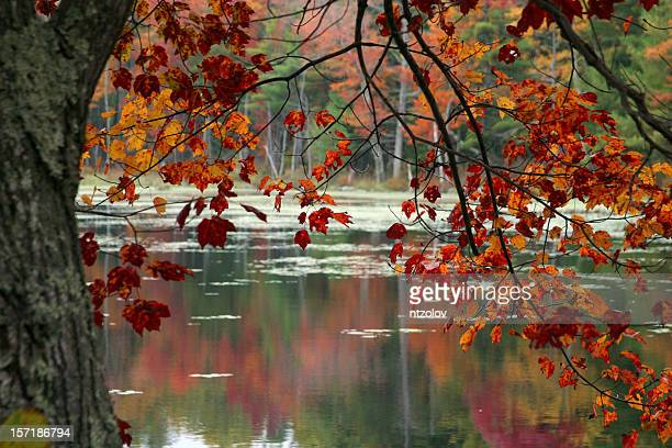 Autumn foliage with lake in the background