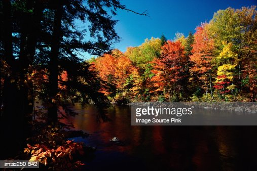 Autumn forest and lake : Foto de stock