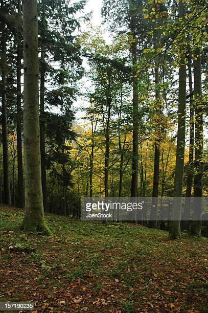 Autumn forest Bouillon belgian Ardennes Belgium