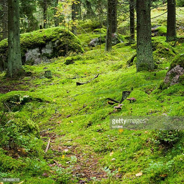Autumn forest Finland