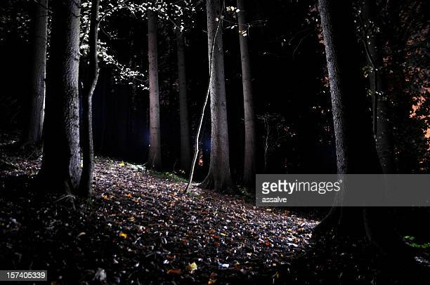 autumn forest in the night