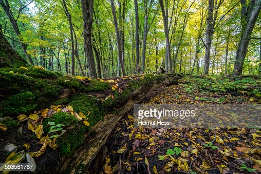Autumn forest in Thuringia