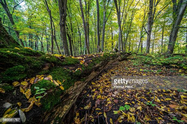 Autumn forest in Thuringia