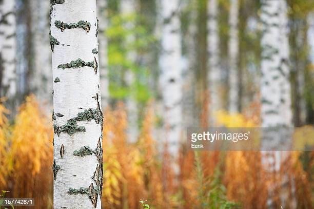 Forêt d'automne