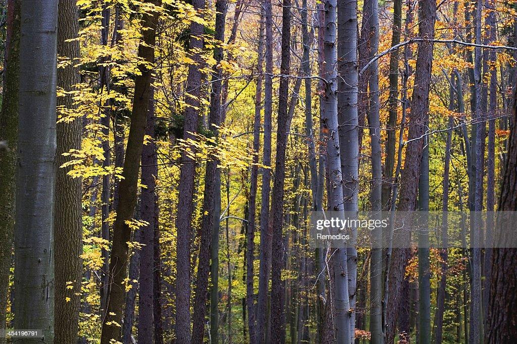 Bosque de otoño : Foto de stock