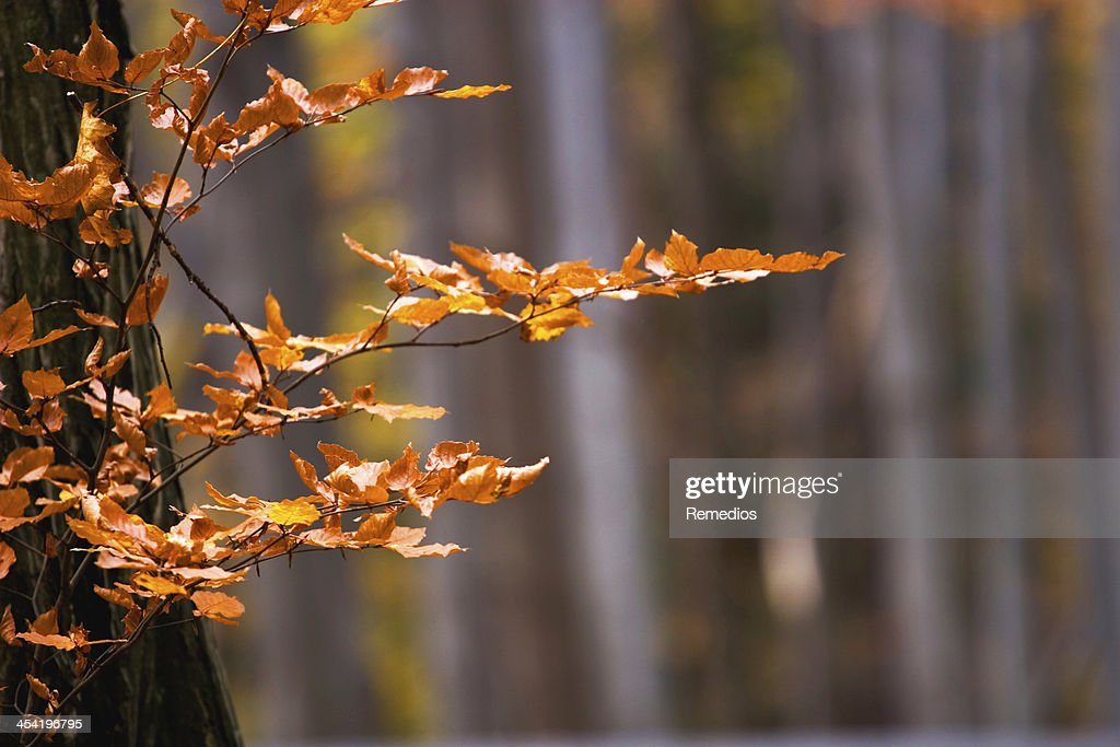 Autumn forest : Stock Photo