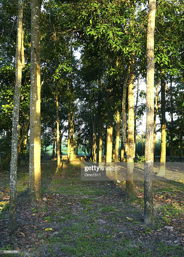 autumn forest trees. nature green wood sunlight backgrounds. : Stock Photo