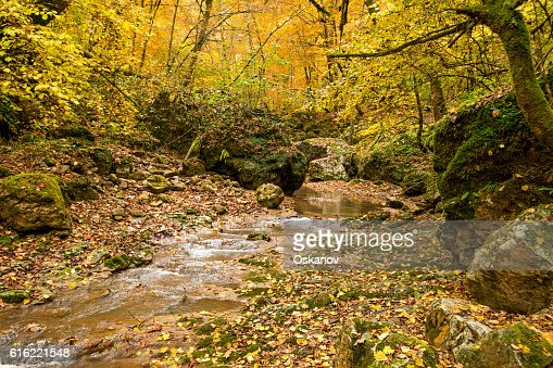 Autumn forest with creek : Stock Photo