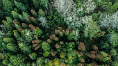 Aerial top down view of autumn forest with green and orange trees in Madeira island Portugal