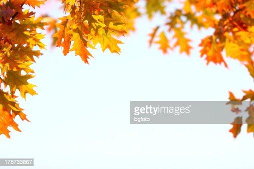 Bastidor de otoño