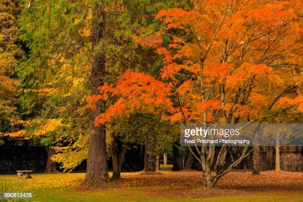 Autumn garden setting