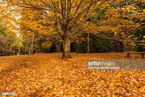 Autumn gardens with sitting bench