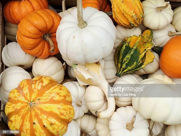 Autumn gourds and pumpkins