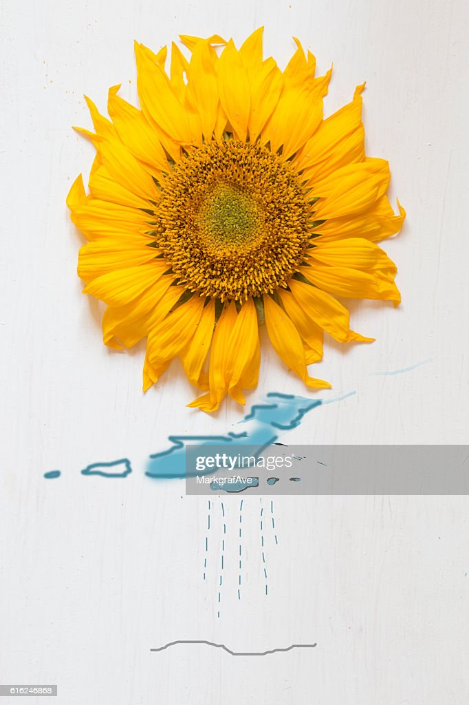 autumn idea, sunflower - sun and rain with drawing clouds : Stock-Foto