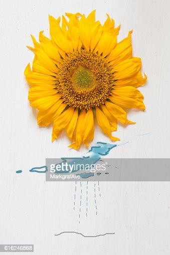autumn idea, sunflower - sun and rain with drawing clouds : Foto de stock