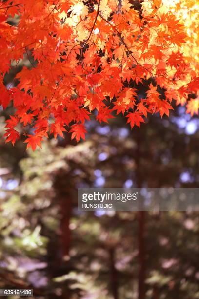 Autumn Image of Bukchon Village in Seoul