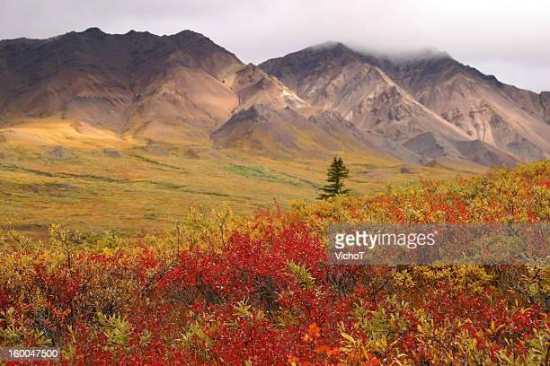 Autumn in Alaska